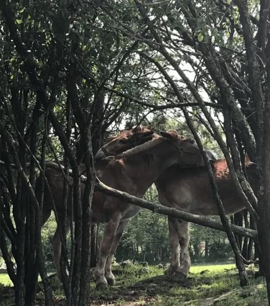 Horse Hangout